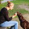 A dog receiving a reward