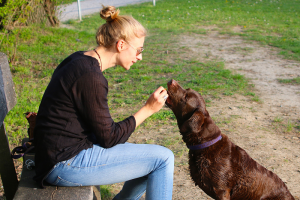 A dog receiving a reward